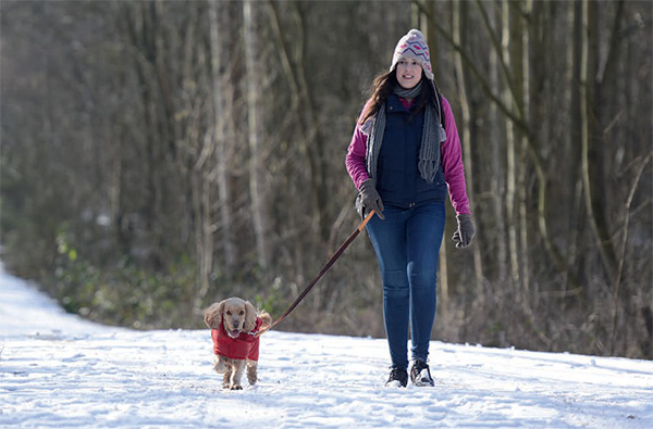 e44e3f0ffc6 Karen Bush provides the best tips to get through the coldest months with your  dog.
